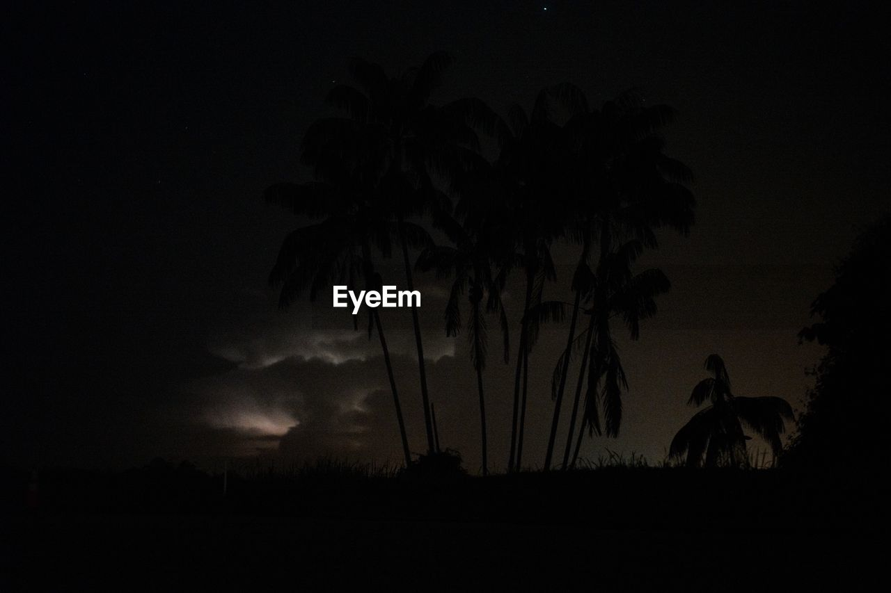 palm tree, tree, silhouette, nature, night, sky, scenics, beauty in nature, outdoors, landscape, growth, storm cloud, no people, thunderstorm, mammal, animal themes