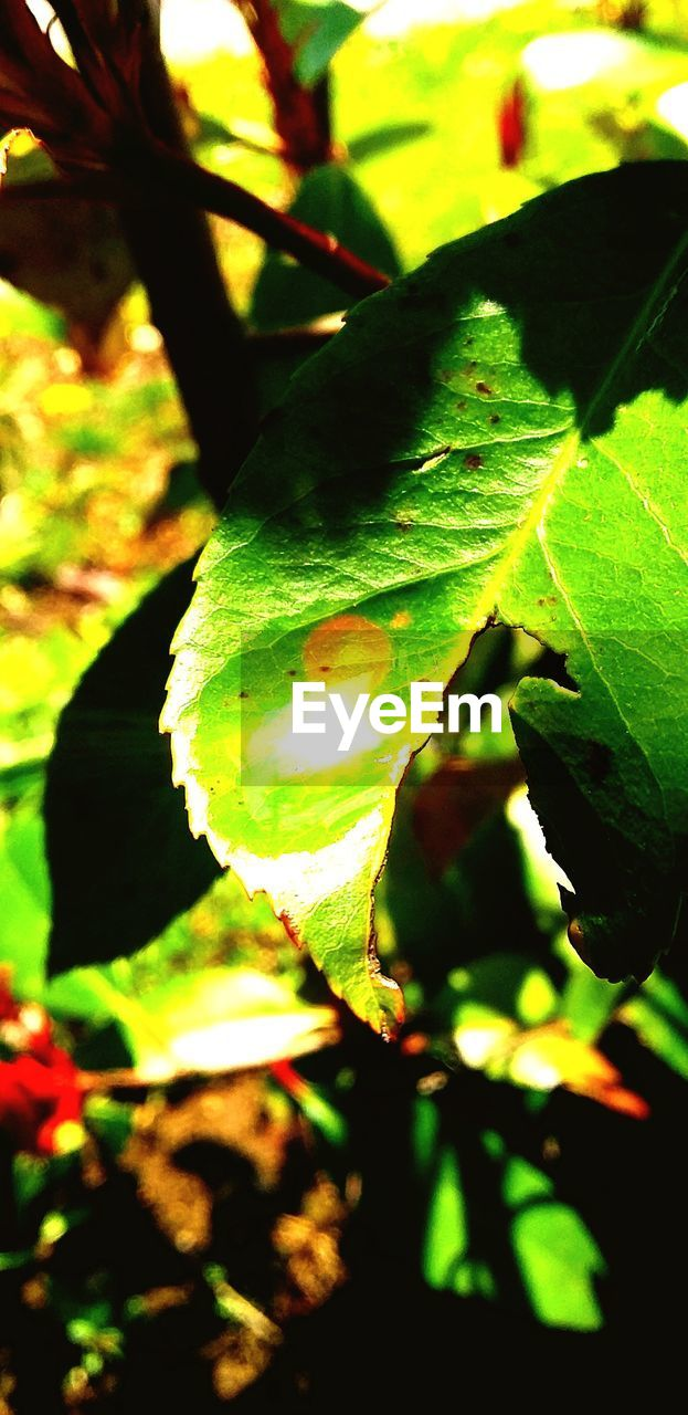 plant part, plant, growth, leaf, close-up, nature, sunlight, no people, day, beauty in nature, green color, outdoors, focus on foreground, selective focus, land, tree, freshness, field, food, tranquility