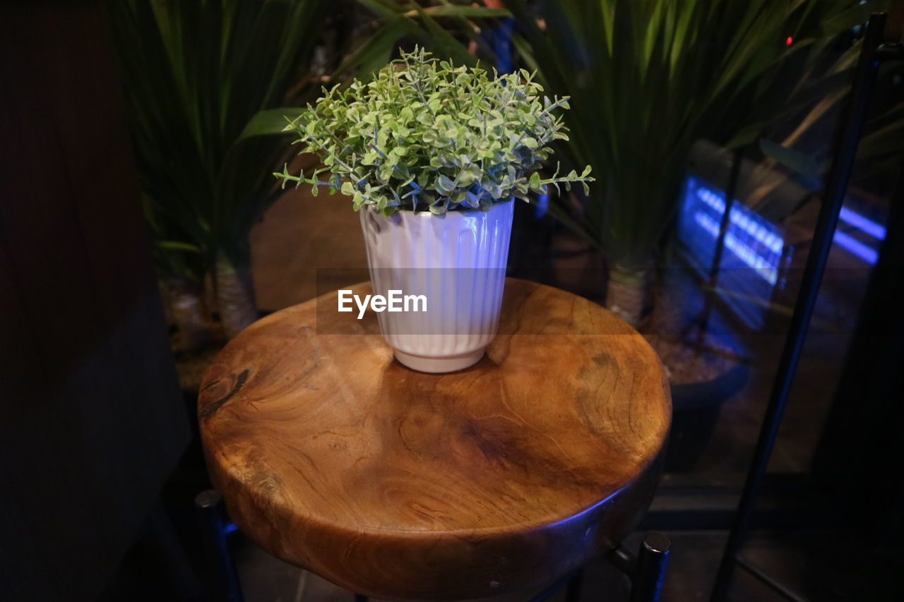 CLOSE-UP OF POTTED PLANT AT TABLE