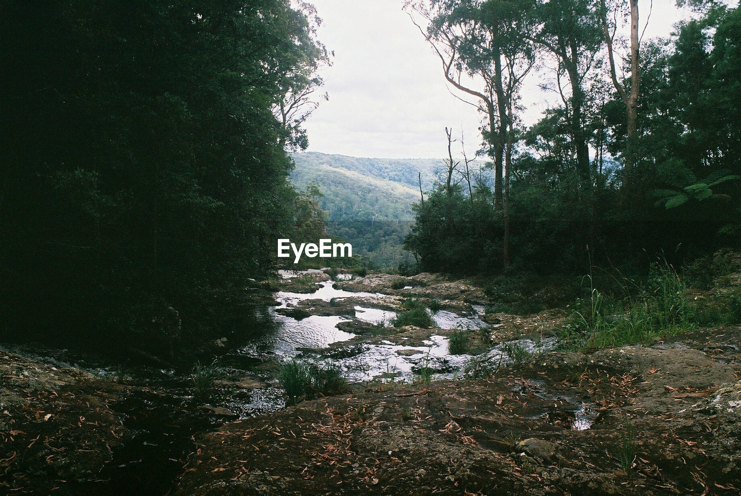 Stream amidst trees on mountain