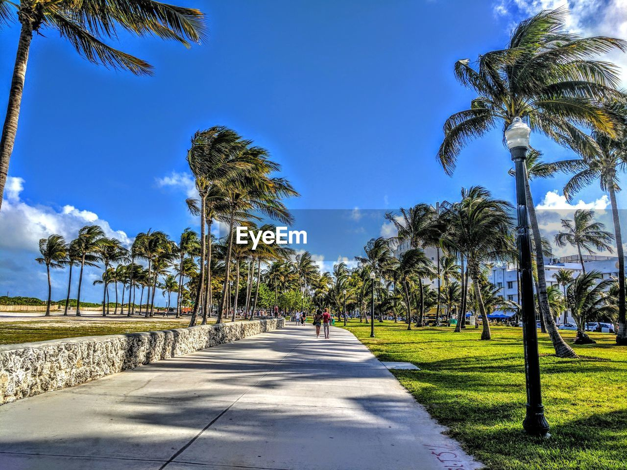 palm tree, tree, walking, day, sunlight, the way forward, growth, real people, shadow, sky, nature, road, outdoors, blue, tranquil scene, scenics, tranquility, beauty in nature, tree trunk, full length, men, women, grass, one person, people