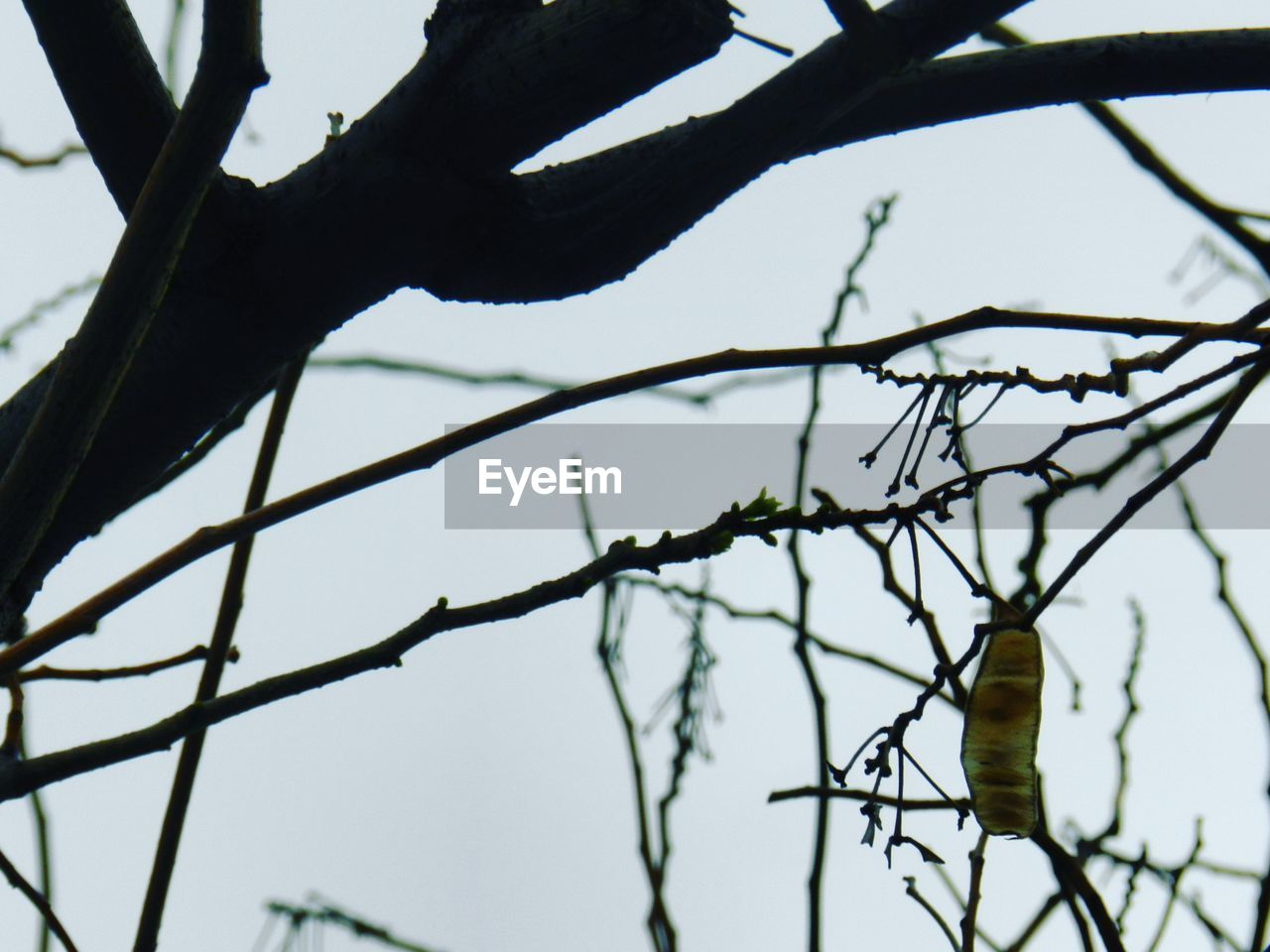 branch, tree, day, no people, nature, focus on foreground, outdoors, close-up, beauty in nature, growth, low angle view, sky