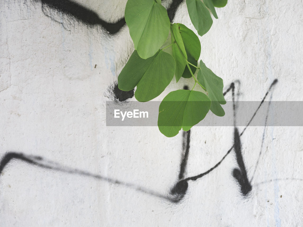 leaf, plant, growth, nature, day, no people, outdoors, architecture, close-up, building exterior