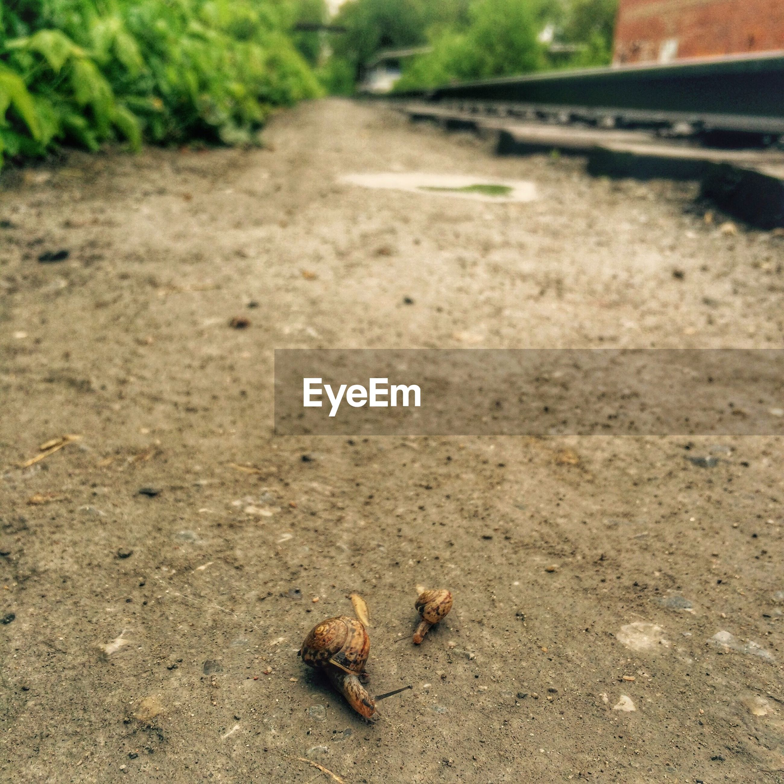animal themes, one animal, animals in the wild, wildlife, street, high angle view, day, road, outdoors, selective focus, nature, zoology, asphalt, surface level, sunlight, close-up, insect, no people, focus on foreground, ground