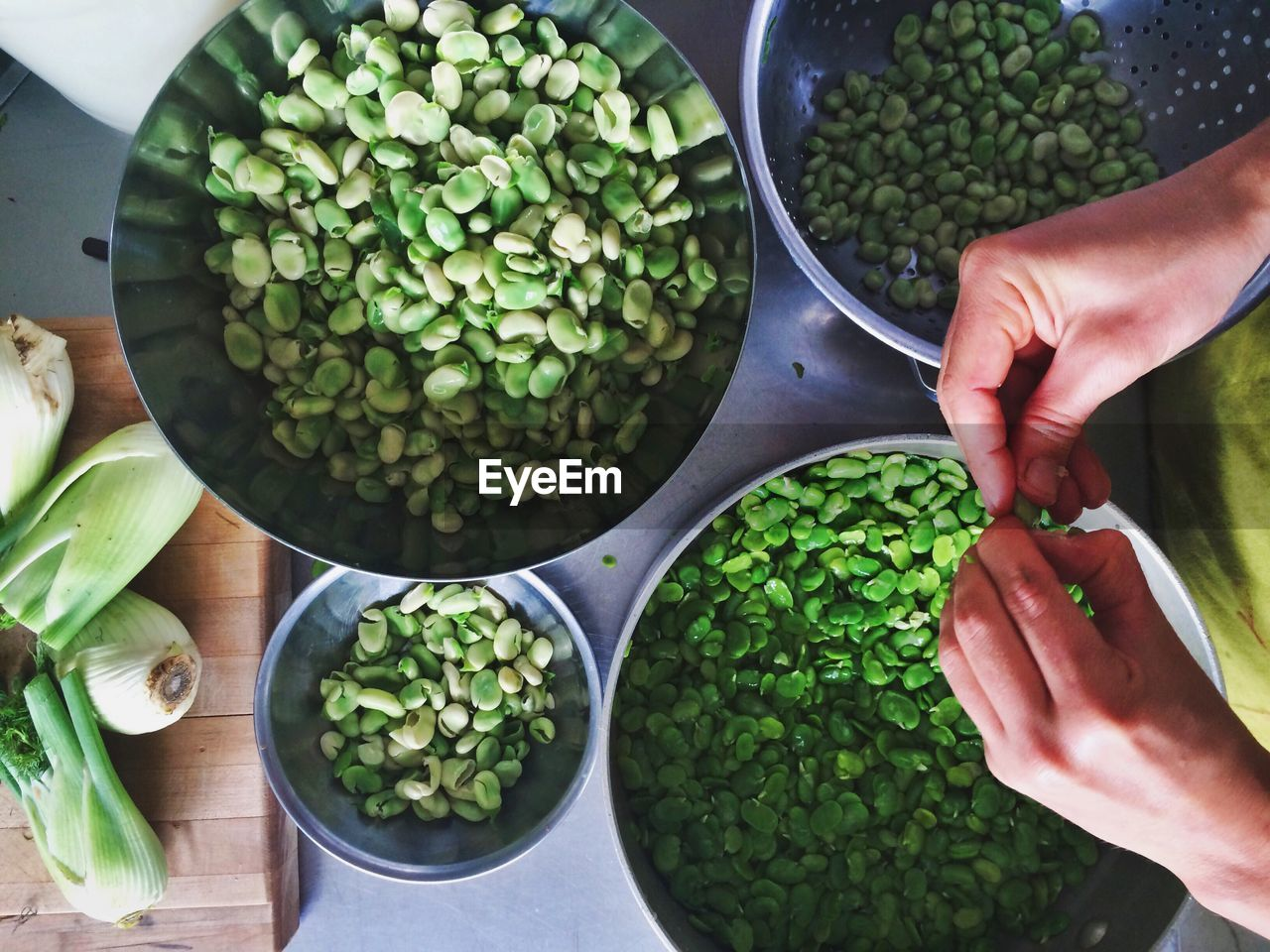 High angle view of person holding fava beans