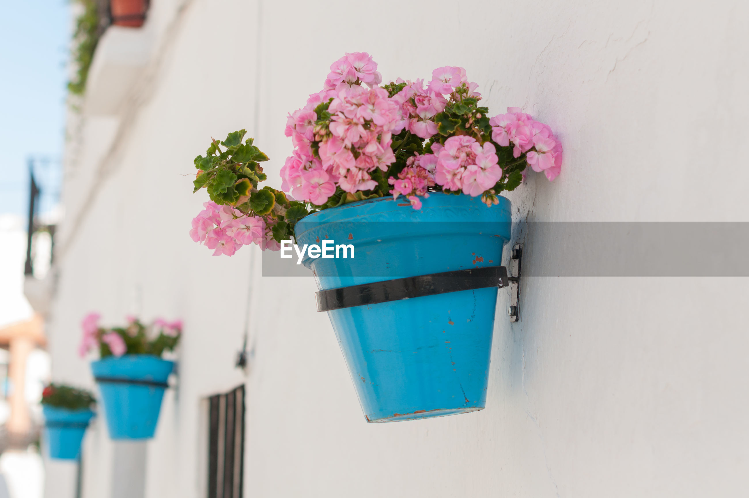 Flower pots mounted on wall