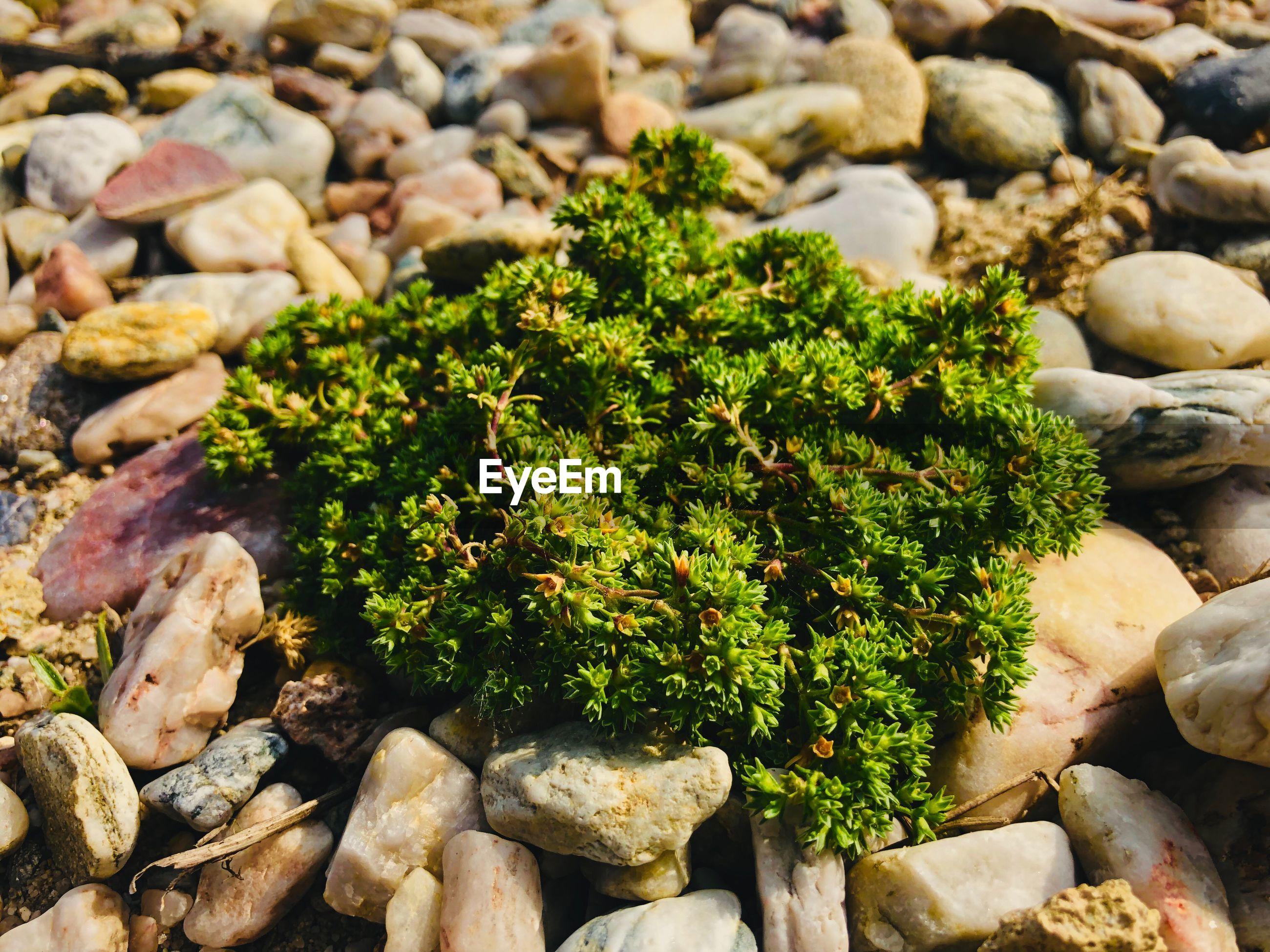 High angle view of pebbles on rocks