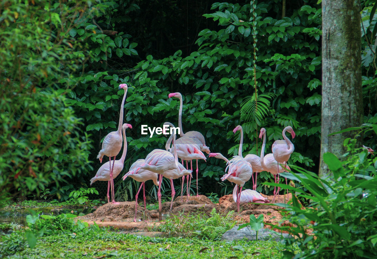 bird, vertebrate, animal themes, group of animals, animal, animals in the wild, plant, animal wildlife, tree, flamingo, nature, land, no people, day, growth, large group of animals, green color, beauty in nature, forest, pink color, outdoors, flock of birds