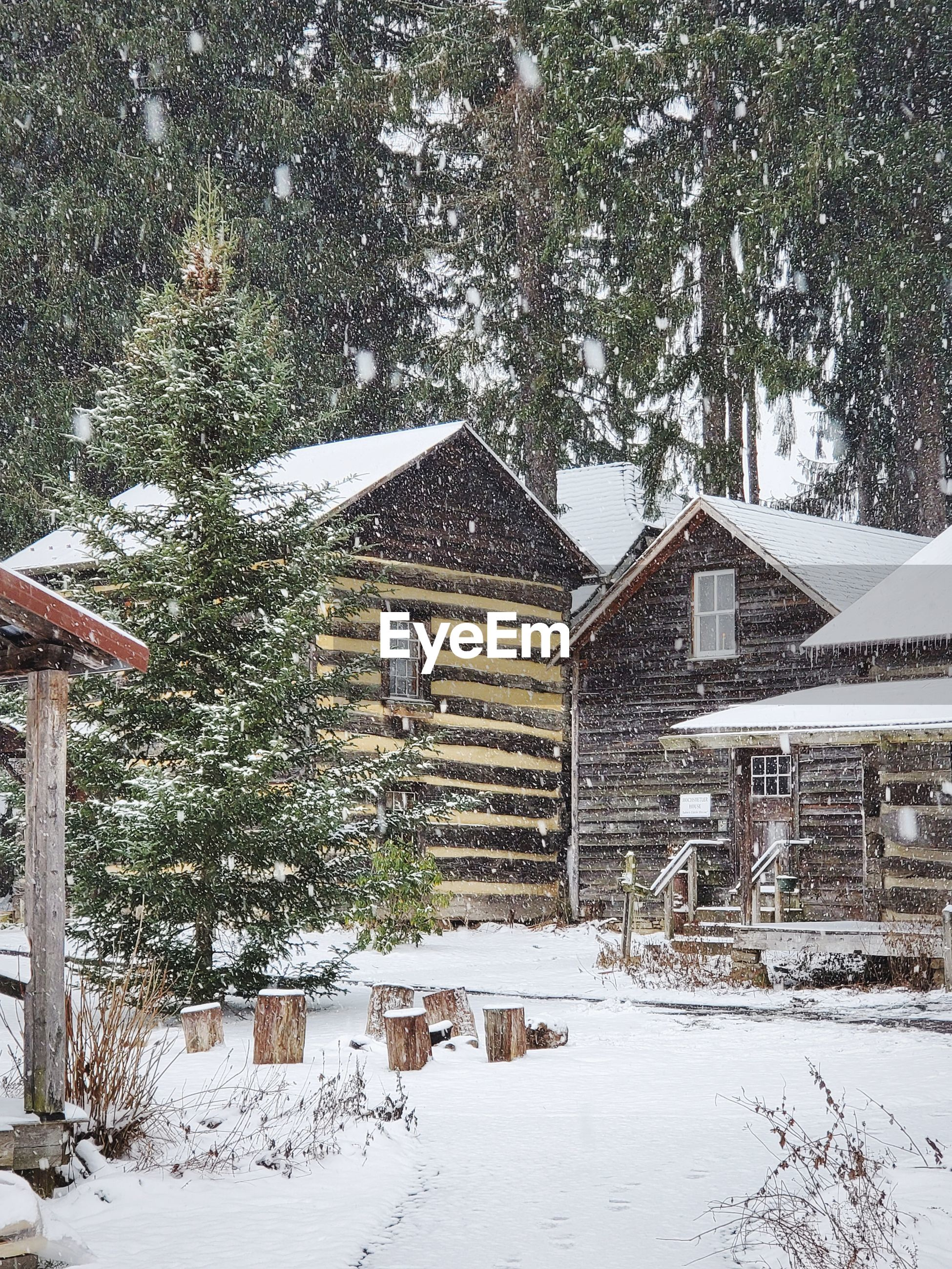 Snow covered houses and trees by log cabin