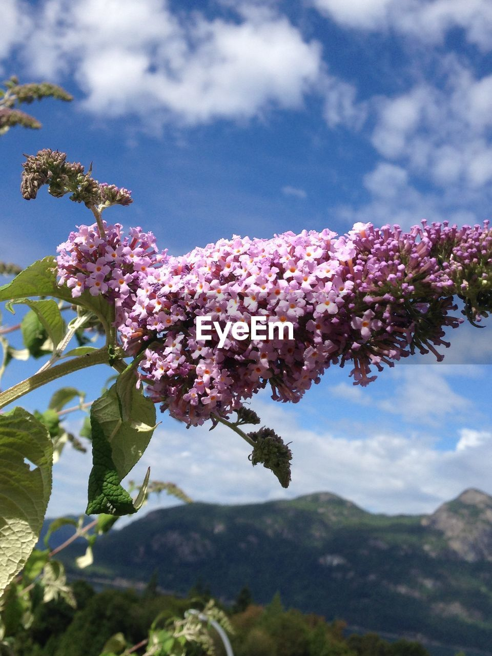 growth, beauty in nature, nature, flower, fragility, freshness, day, tree, no people, sky, outdoors, low angle view, cloud - sky, close-up, pink color, focus on foreground, plant, petal, blooming, branch, flower head