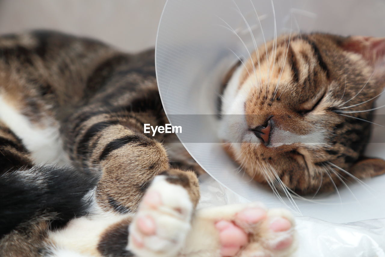 Close-Up Of Cat Wearing Protective Collar Sleeping