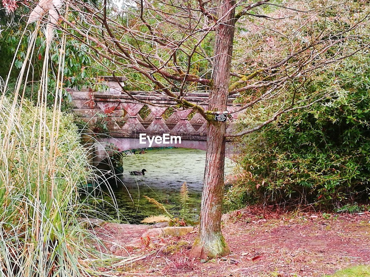 tree, nature, outdoors, architecture, day, built structure, growth, water, no people, river, tranquility, forest, bridge - man made structure, beauty in nature, scenics, branch