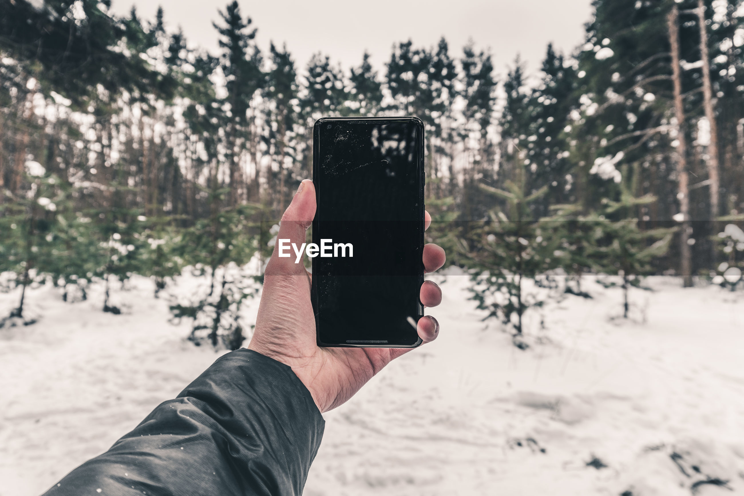 Cropped hand photographing snow covered trees with smart phone in forest