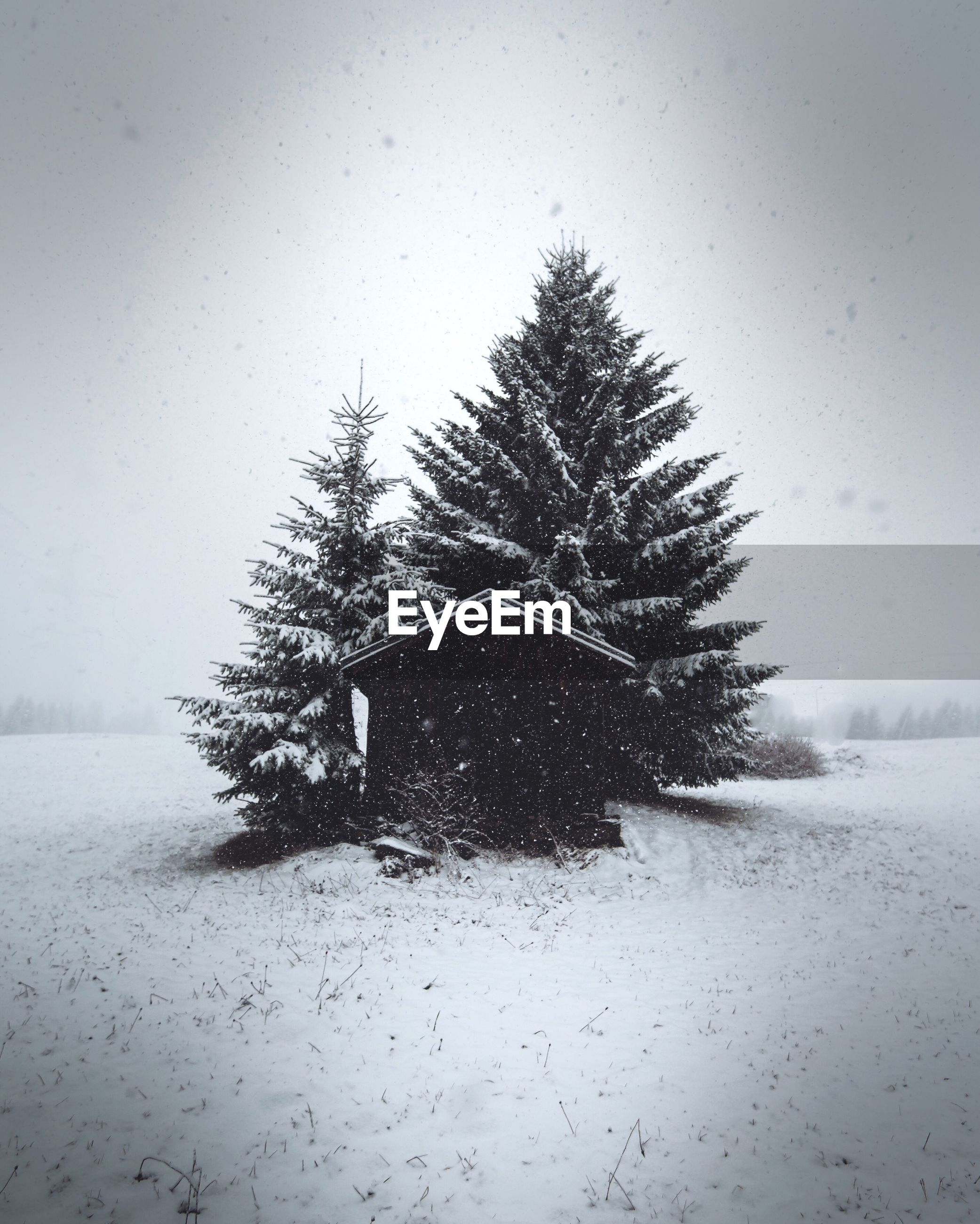 tree, snow, winter, cold temperature, nature, no people, christmas tree, landscape, tranquility, outdoors, beauty in nature, snowing, christmas, day, sky, close-up