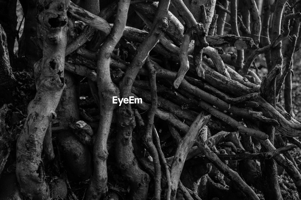 root, no people, tree, outdoors, day, close-up, complexity, nature