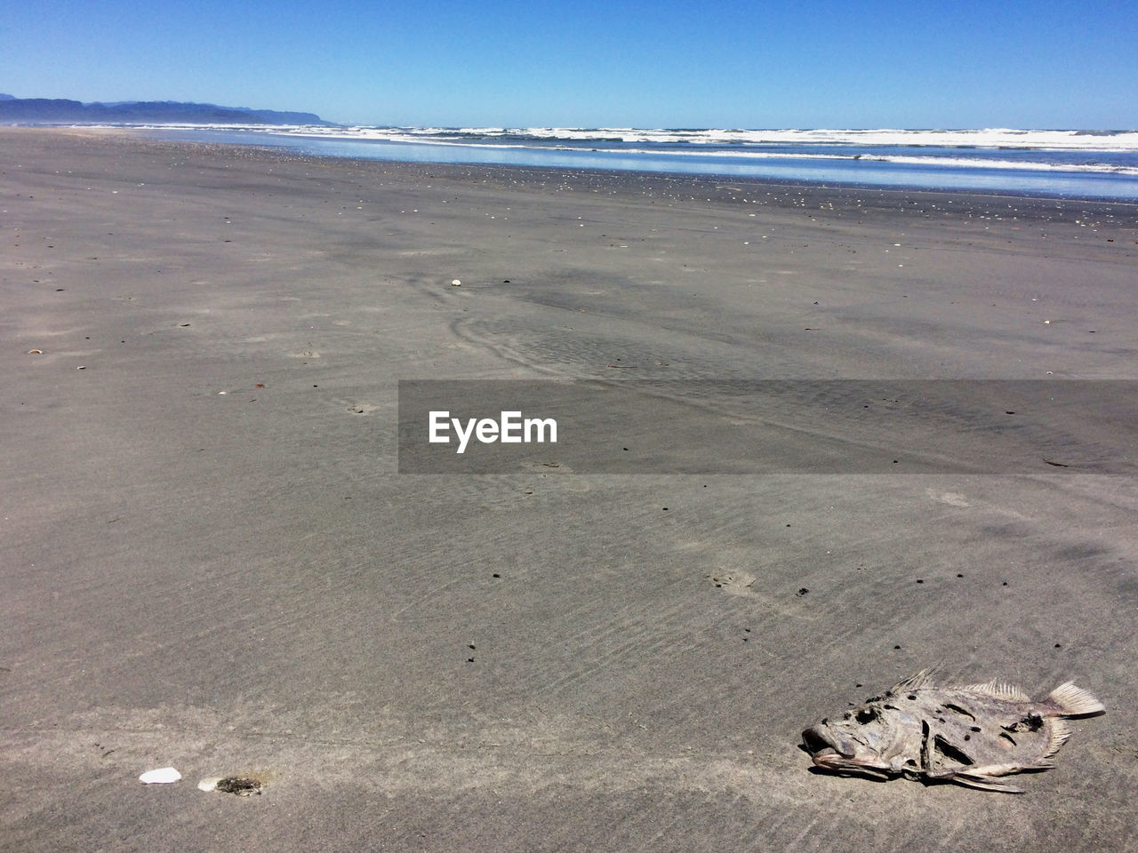 Fish skeleton on beach