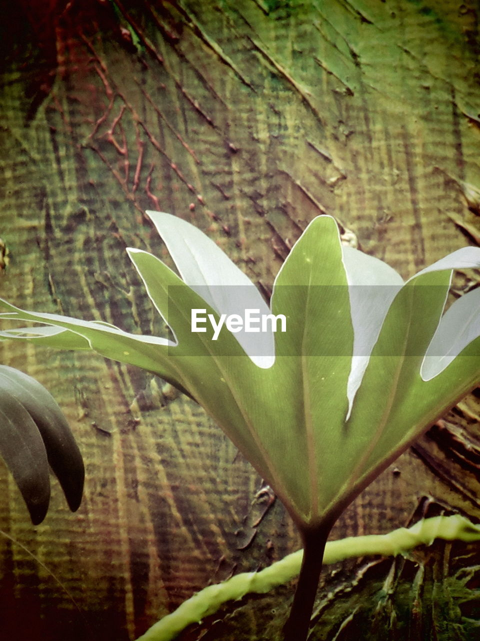 growth, leaf, plant, nature, beauty in nature, green color, no people, outdoors, day, close-up, freshness, fragility, flower