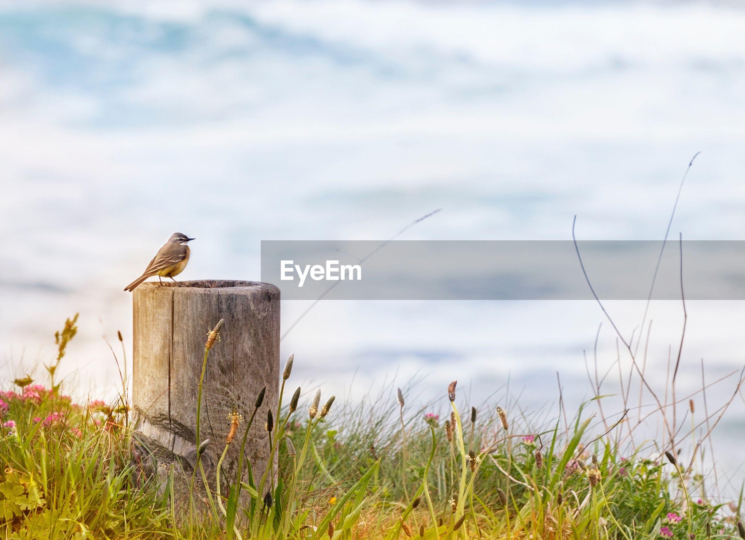 Bird perching on wooden post in field against sky