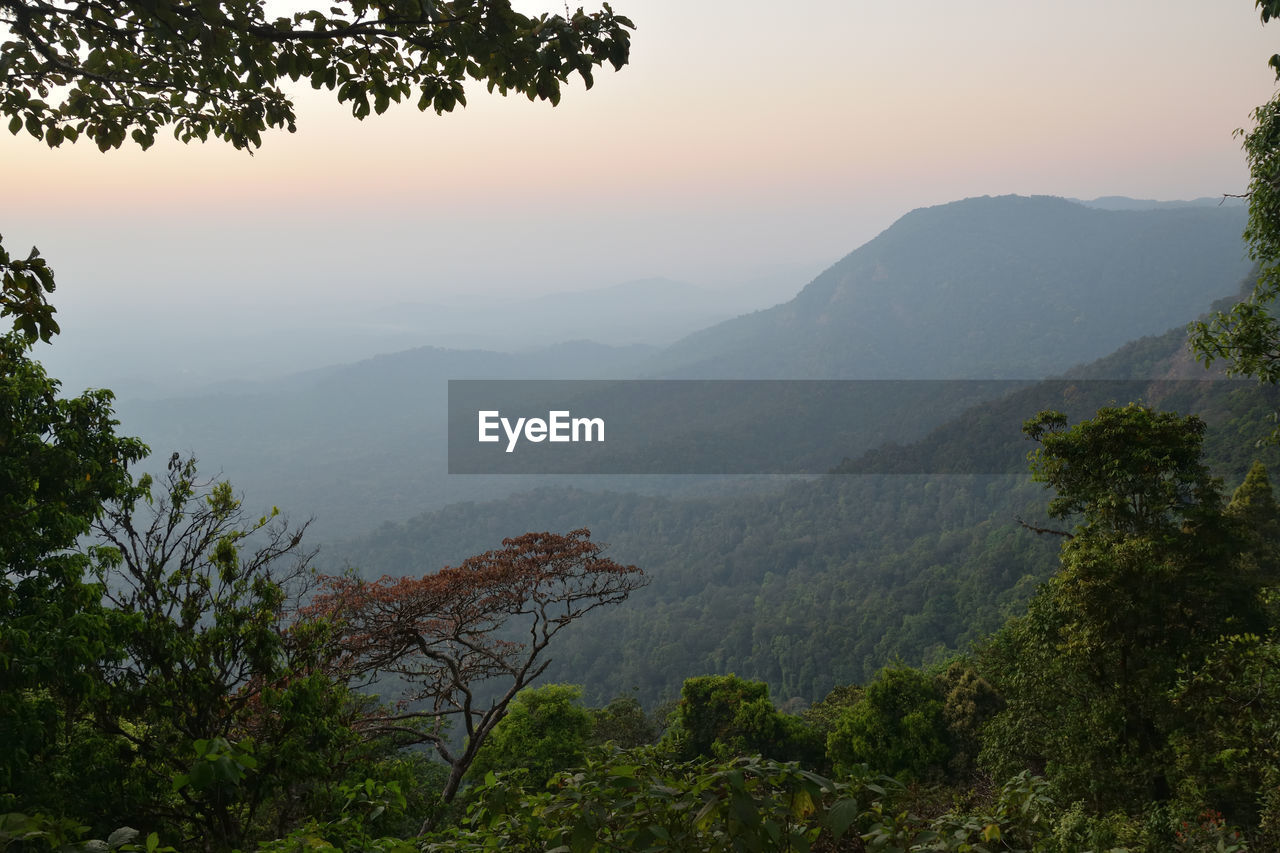 tree, mountain, nature, beauty in nature, scenics, tranquility, tranquil scene, landscape, sunset, outdoors, mountain range, forest, growth, no people, plant, day, sky