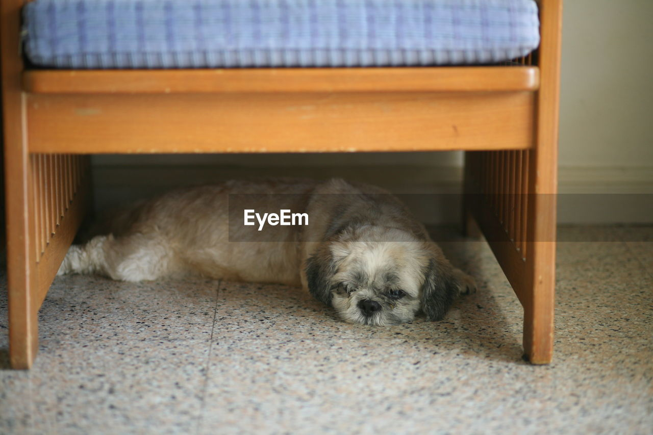 pets, one animal, dog, animal themes, domestic animals, mammal, relaxation, lying down, sleeping, indoors, sitting, day, no people, close-up