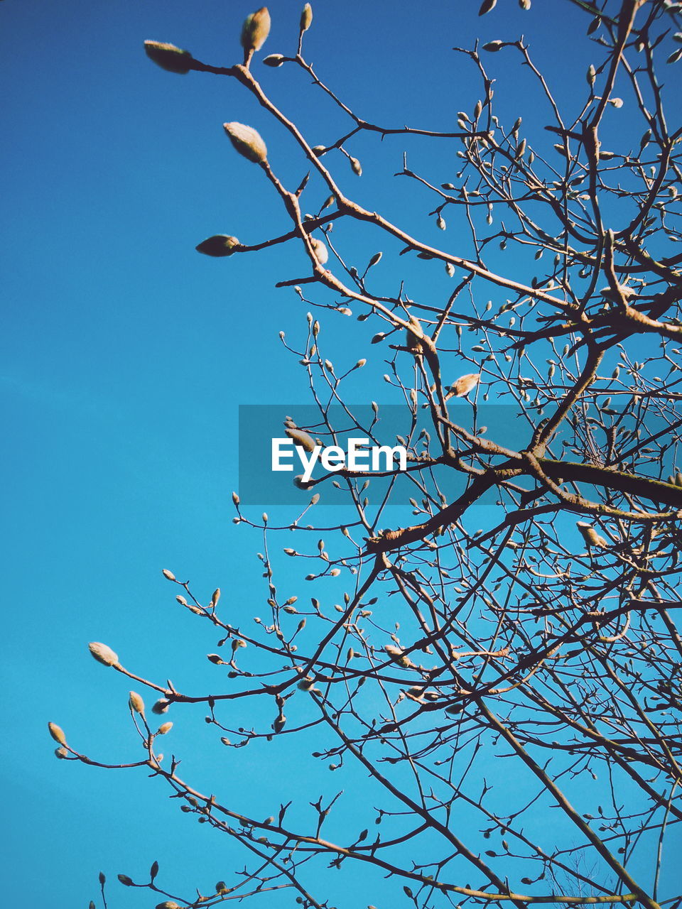 low angle view, branch, tree, blue, nature, beauty in nature, bare tree, no people, growth, day, outdoors, clear sky, flower, sky, fragility, freshness