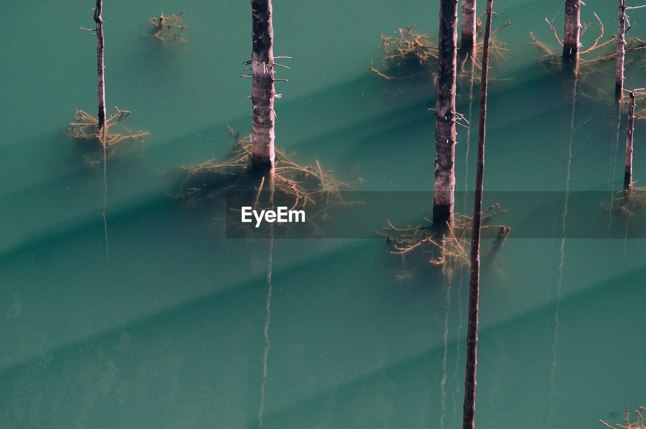 High Angle View Of Birch Tree Roots In Lake Kaindy