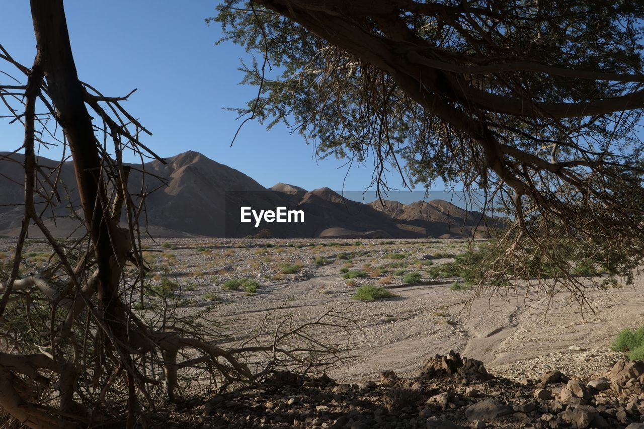 tree, sky, plant, scenics - nature, land, tranquility, mountain, nature, environment, tranquil scene, landscape, no people, beauty in nature, non-urban scene, day, clear sky, outdoors, branch, remote, desert, arid climate, climate