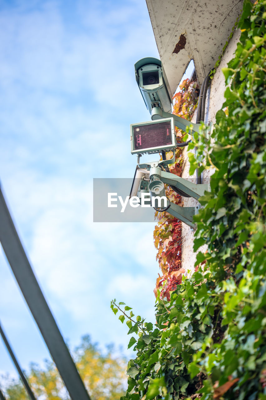 sky, nature, day, cloud - sky, plant, no people, green color, architecture, low angle view, outdoors, metal, food and drink, built structure, focus on foreground, food, leaf, selective focus, close-up, growth, plant part