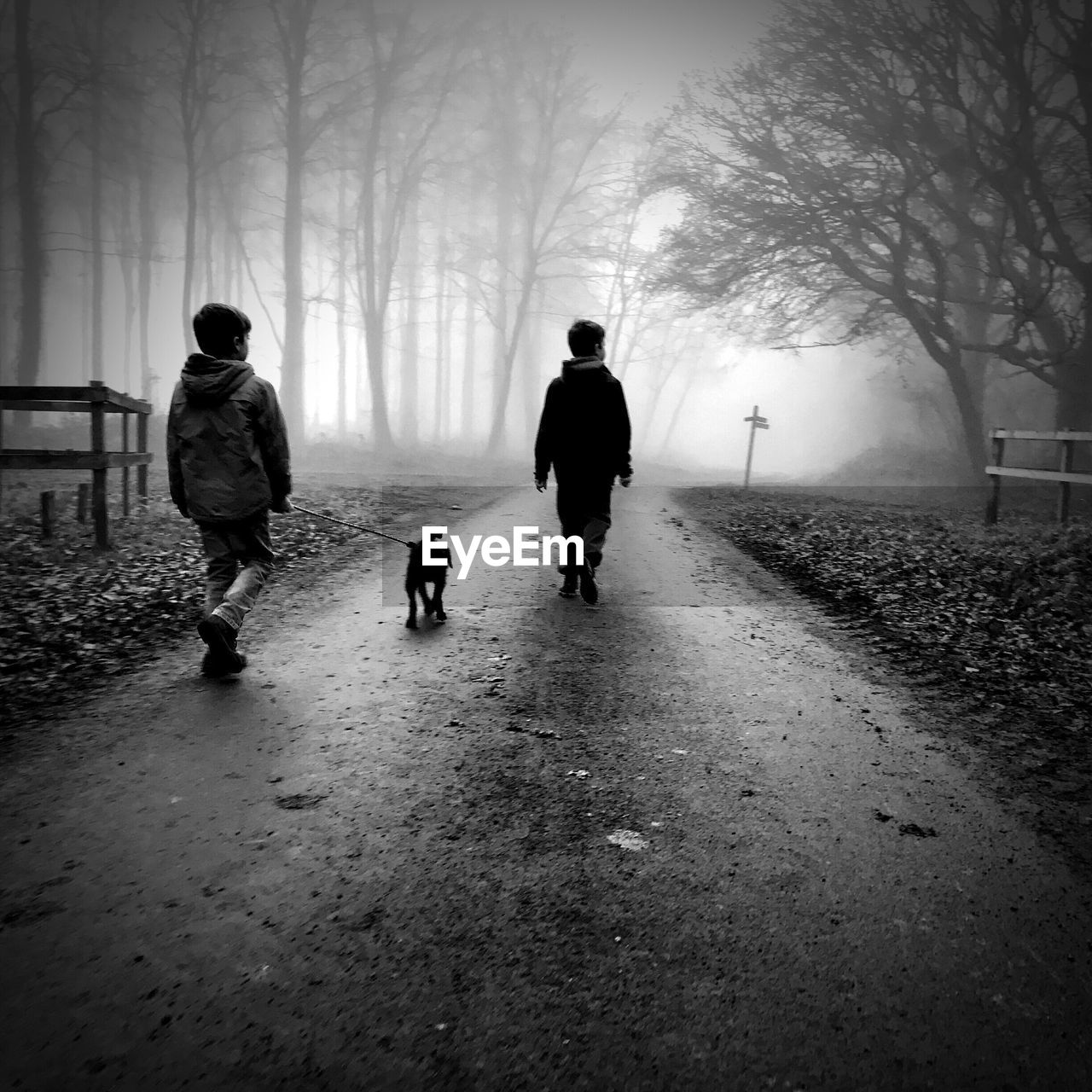 Rear view of siblings with dog walking on road in forest during foggy weather