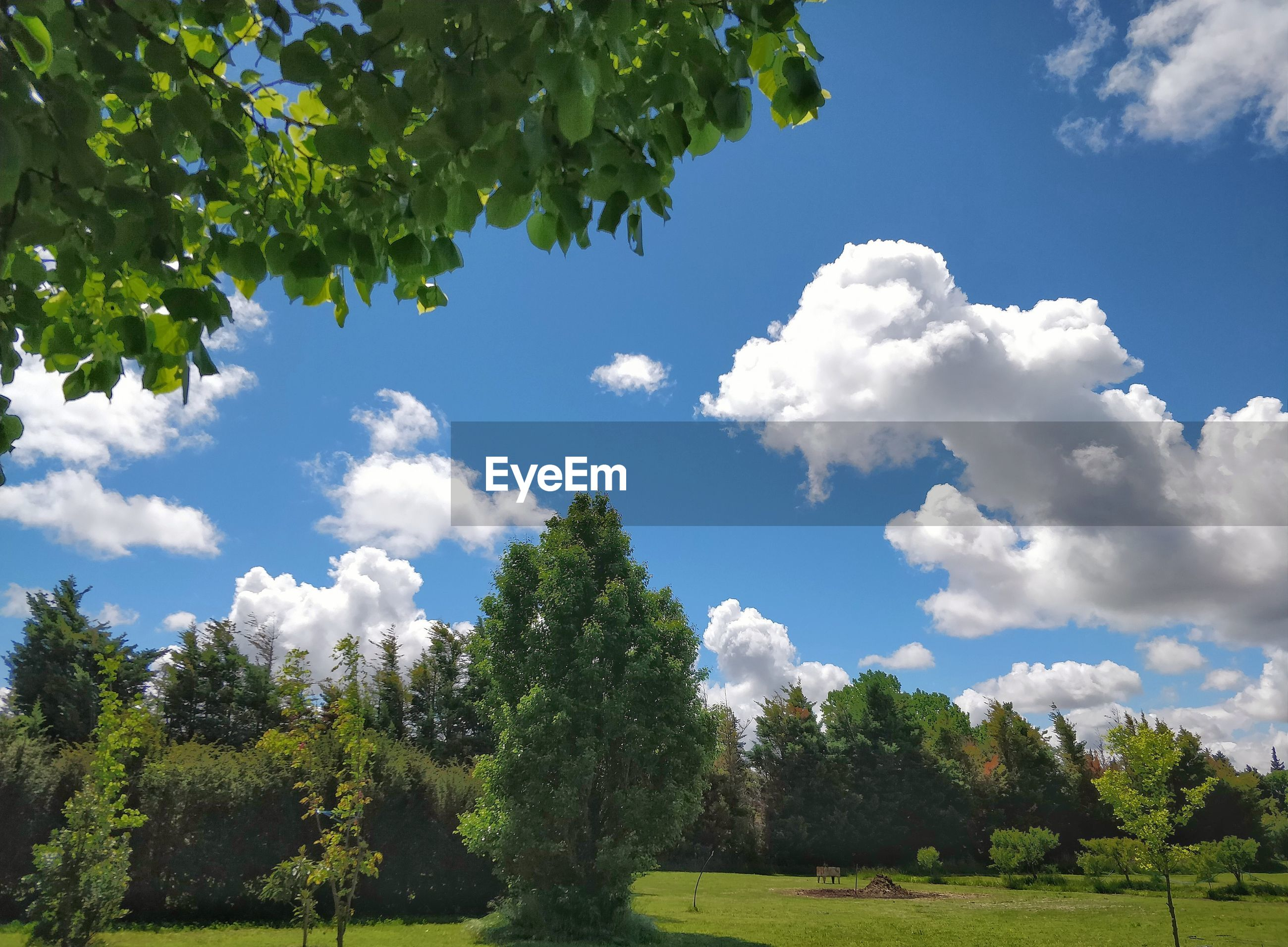 LOW ANGLE VIEW OF TREES ON LANDSCAPE AGAINST SKY