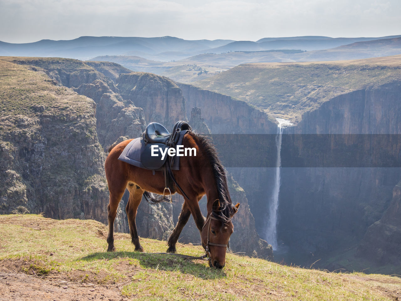 HORSE STANDING ON LANDSCAPE AGAINST SKY