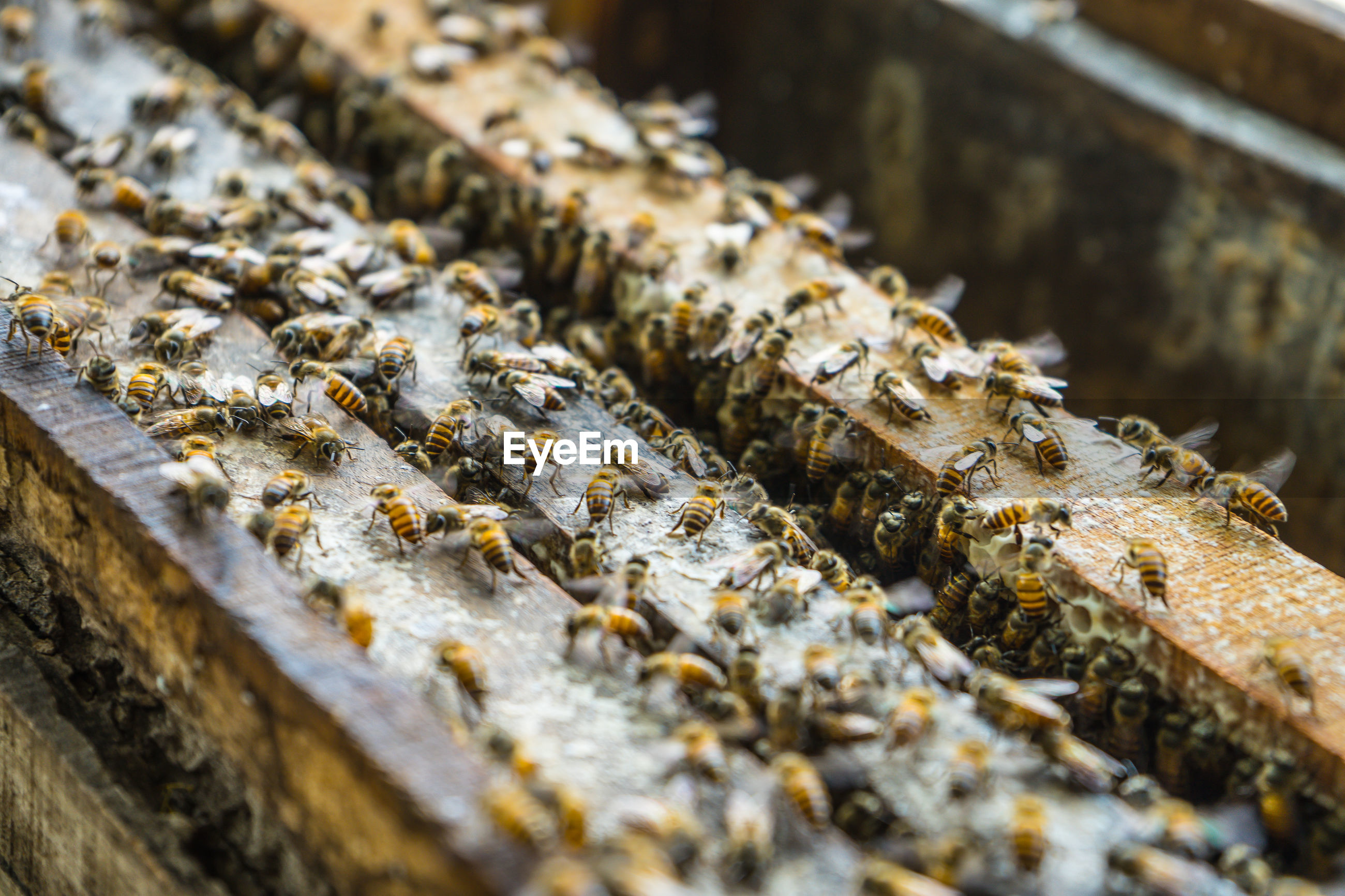 High angle view of bees in beehive