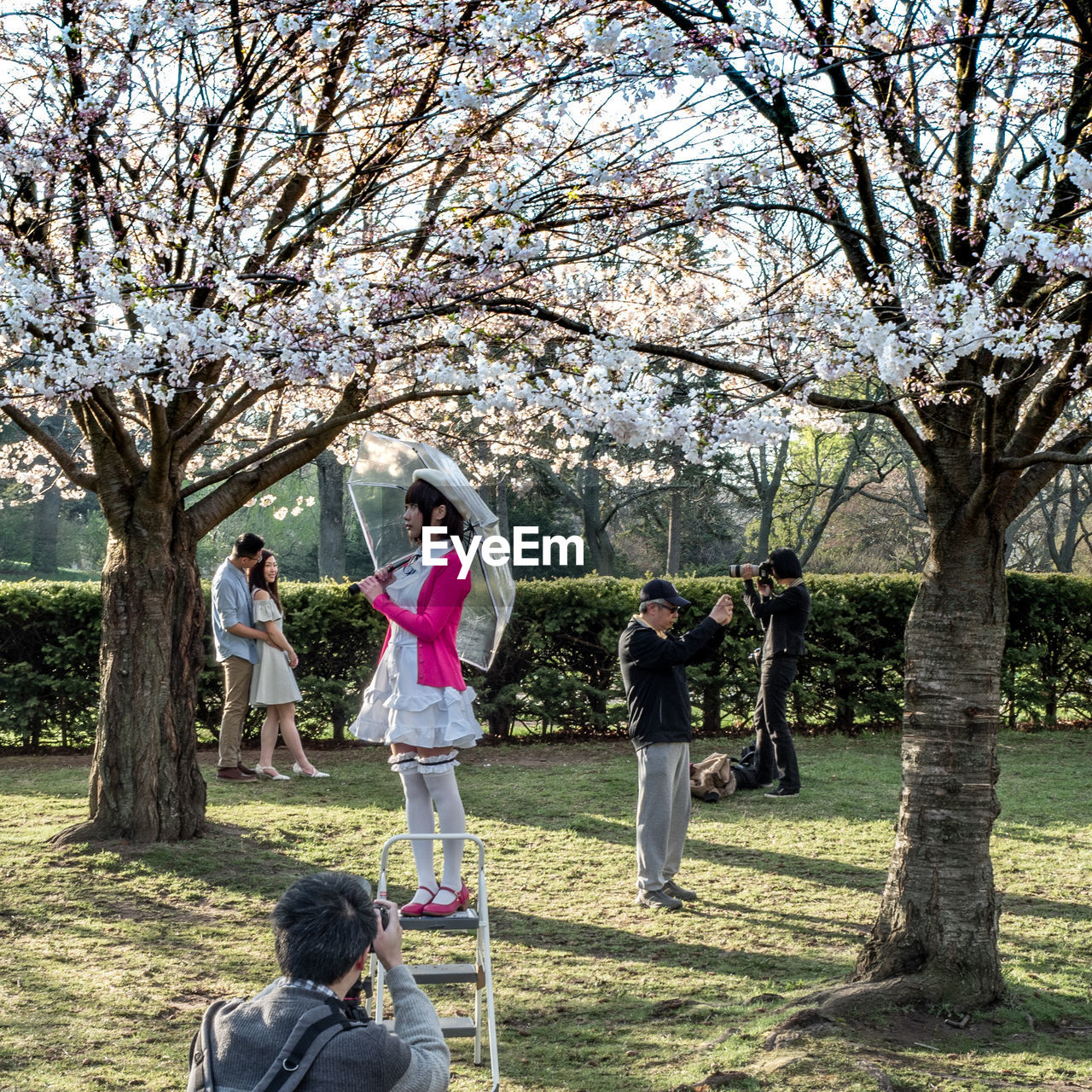 tree, women, plant, group of people, full length, adult, flower, day, grass, females, nature, men, springtime, togetherness, standing, young women, park, young adult, park - man made space, blossom, outdoors, positive emotion, couple - relationship