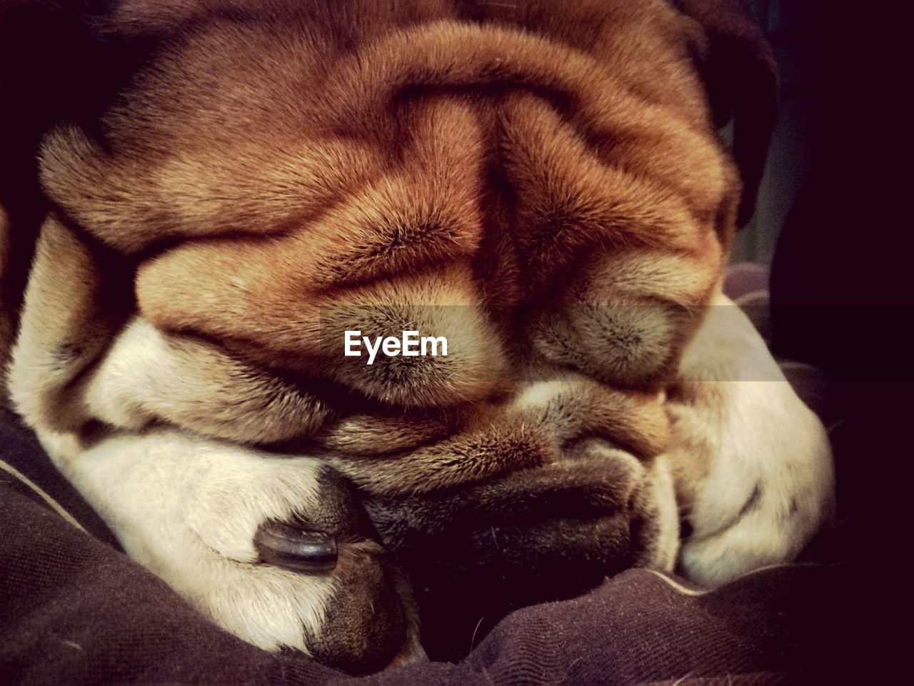 pets, one animal, sleeping, animal themes, domestic animals, mammal, paw, indoors, animal leg, dog, domestic cat, close-up, feline, relaxation, no people, day