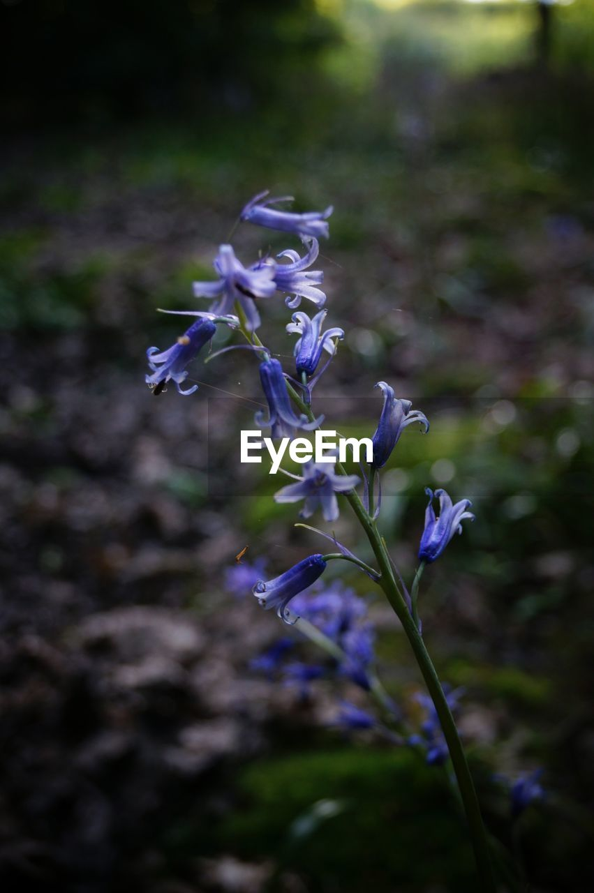 purple, flower, fragility, nature, beauty in nature, petal, freshness, growth, plant, no people, day, outdoors, flower head, blooming, close-up, crocus