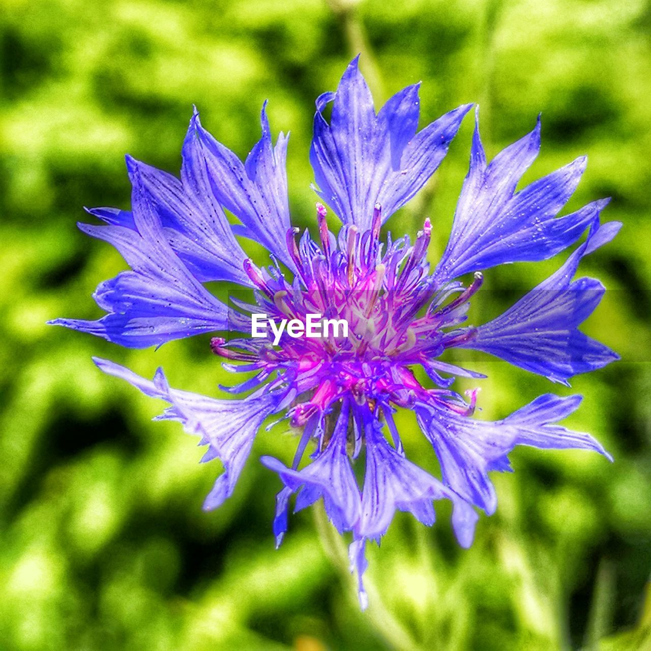 flowering plant, flower, freshness, vulnerability, fragility, plant, petal, beauty in nature, growth, close-up, flower head, inflorescence, nature, day, focus on foreground, purple, no people, outdoors, sunlight, spring