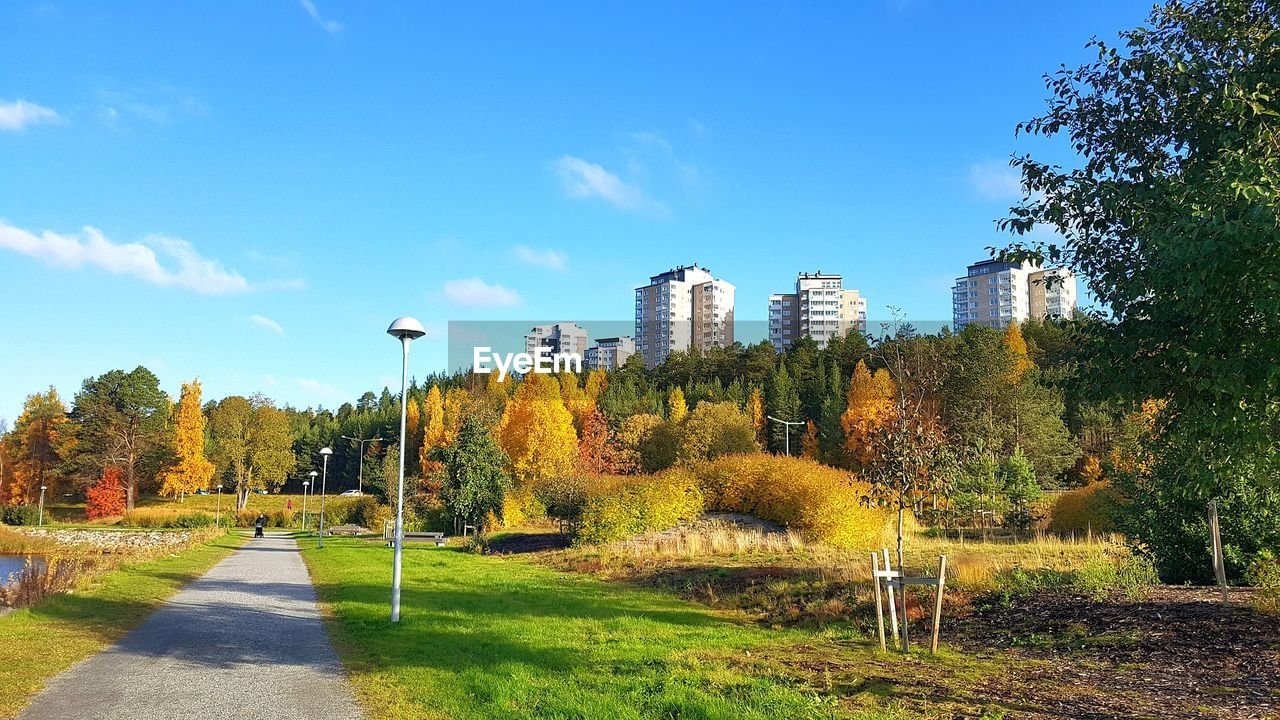 plant, tree, sky, nature, built structure, architecture, day, sunlight, building exterior, no people, growth, grass, park, blue, green color, street light, park - man made space, autumn, city, landscape, change, outdoors