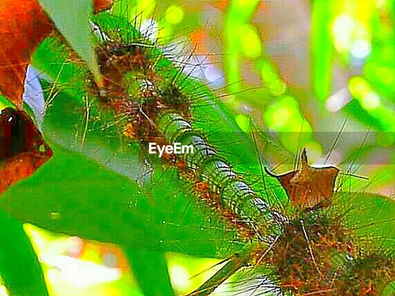 animal, animal themes, green color, animal wildlife, invertebrate, insect, close-up, leaf, animals in the wild, nature, plant part, no people, one animal, day, beauty in nature, plant, focus on foreground, selective focus, outdoors, animal wing