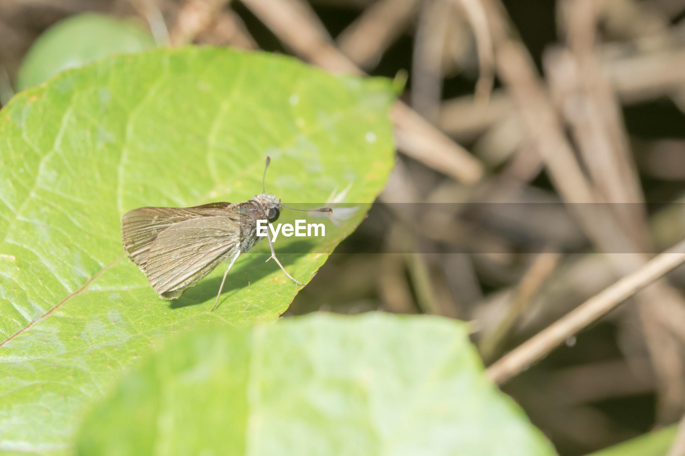 Close-up of moth on leaf