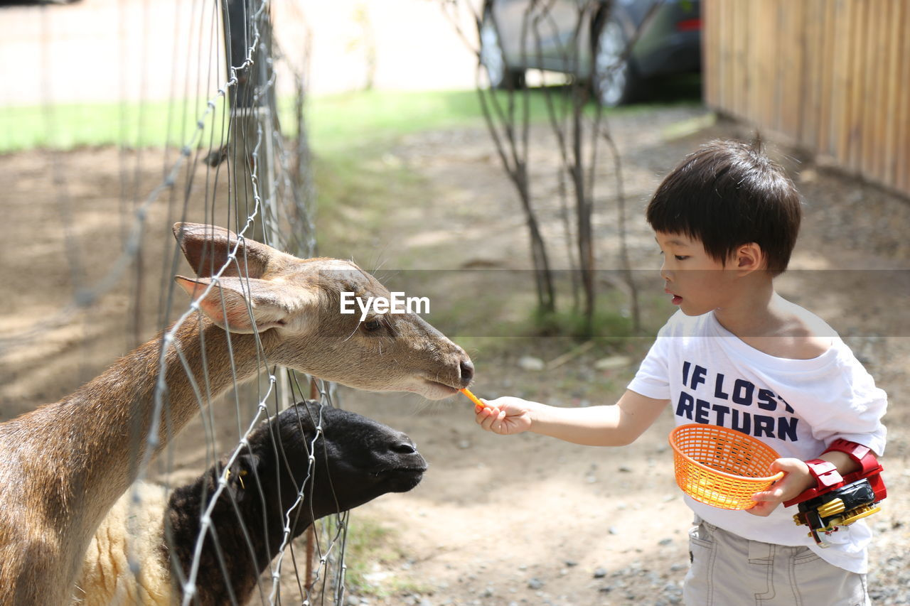 Boy Feeding Deer In Zoo