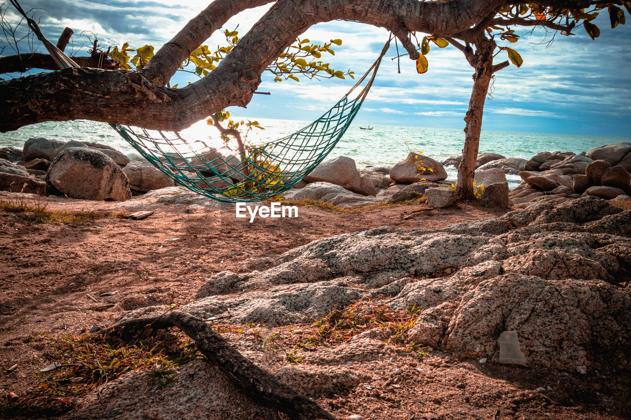 land, nature, water, sea, solid, tranquility, tree, rock, beach, beauty in nature, no people, rock - object, plant, day, sky, tranquil scene, scenics - nature, outdoors, trunk