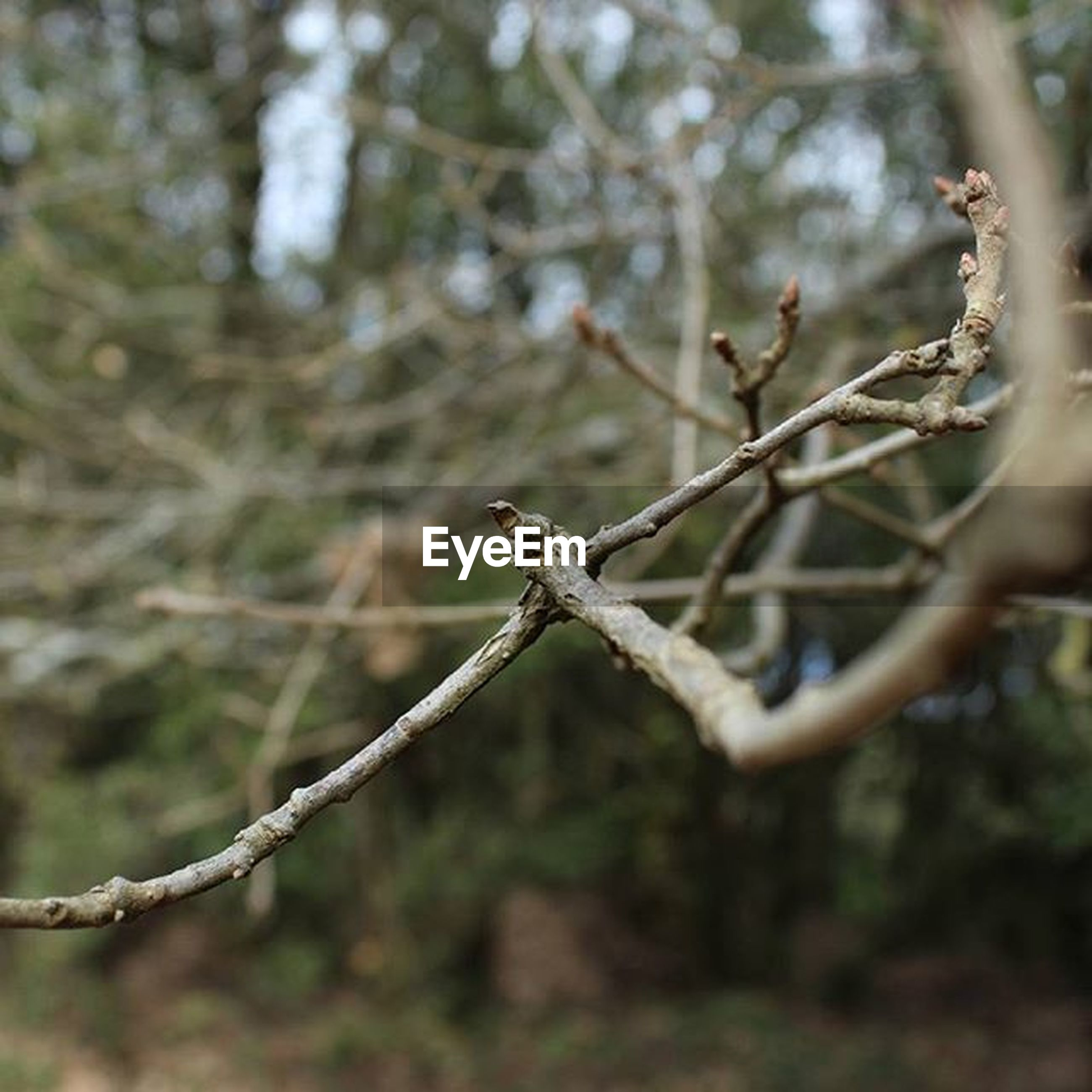 focus on foreground, branch, tree, close-up, twig, nature, tree trunk, selective focus, day, outdoors, growth, tranquility, forest, no people, beauty in nature, dead plant, dry, stem, plant, barbed wire