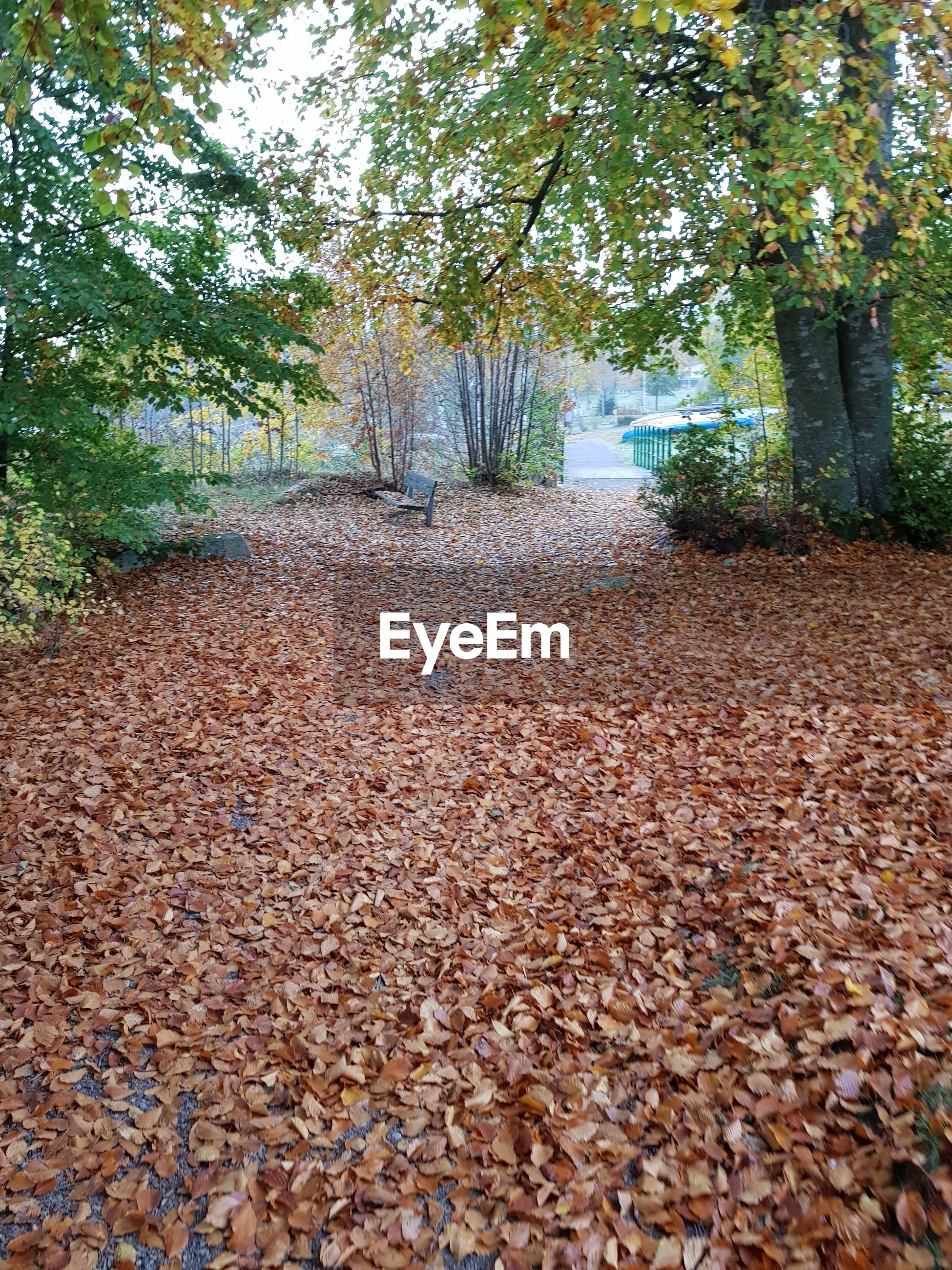 SURFACE LEVEL OF DRY LEAVES FALLEN ON FOOTPATH