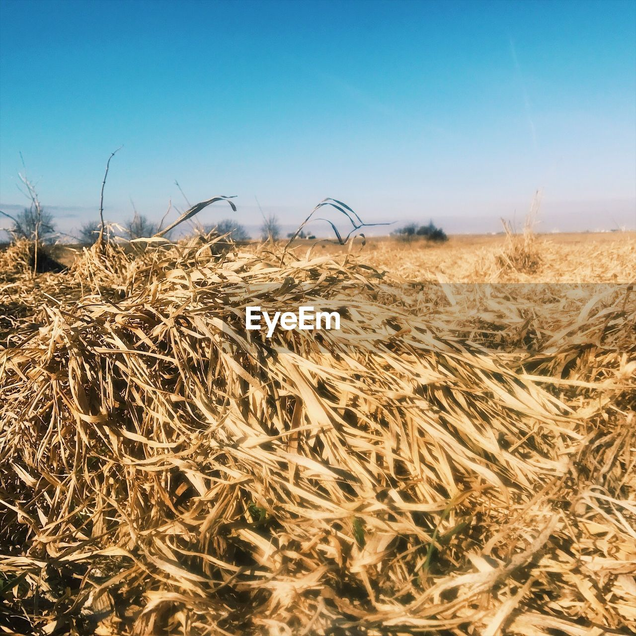 sky, landscape, land, field, tranquility, nature, agriculture, environment, tranquil scene, plant, clear sky, rural scene, scenics - nature, crop, beauty in nature, day, no people, farm, growth, sunlight, outdoors, arid climate