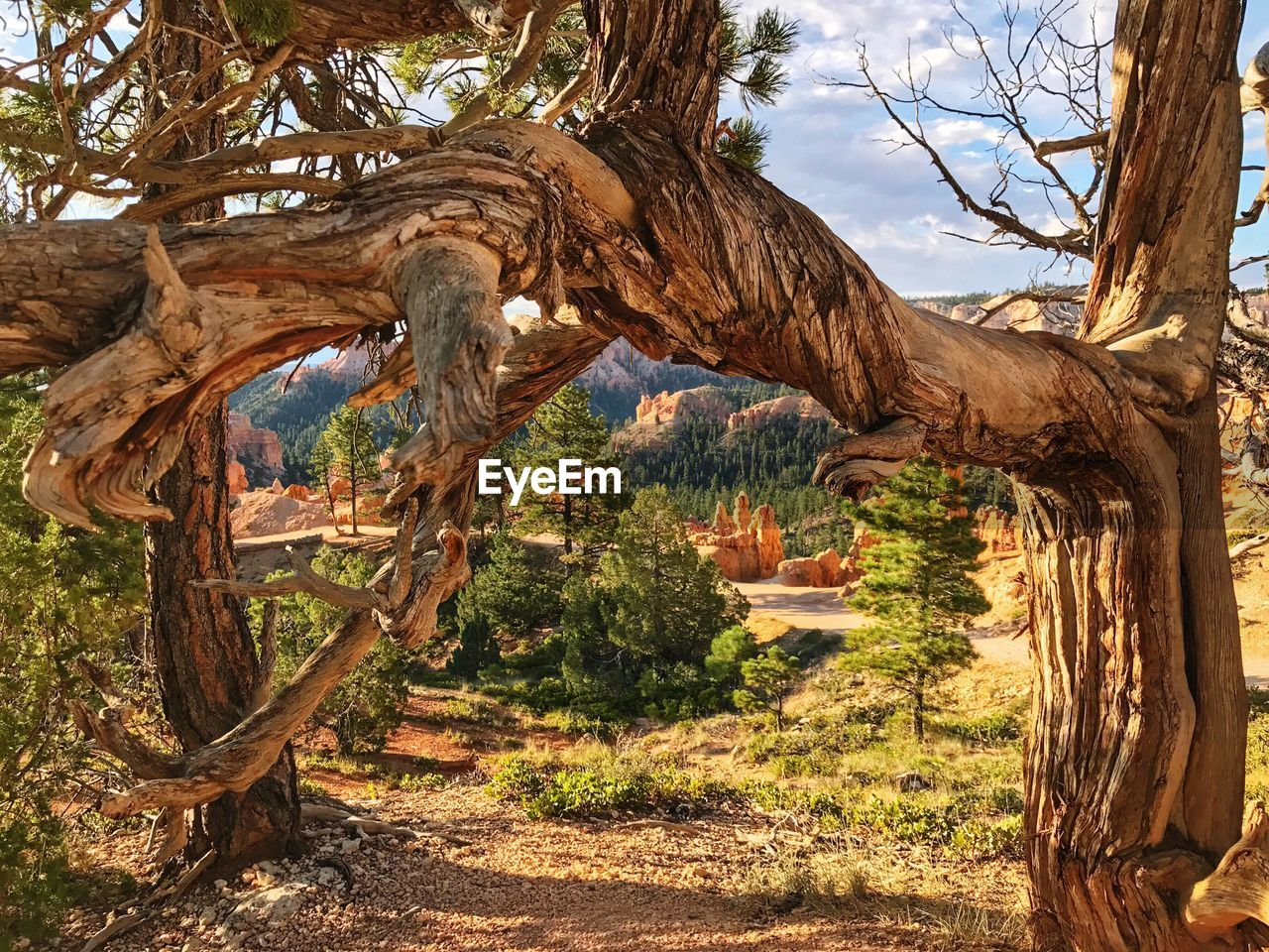 tree, nature, tranquility, growth, rock - object, no people, beauty in nature, tree trunk, tranquil scene, day, plant, outdoors, scenics, branch, mountain, sky