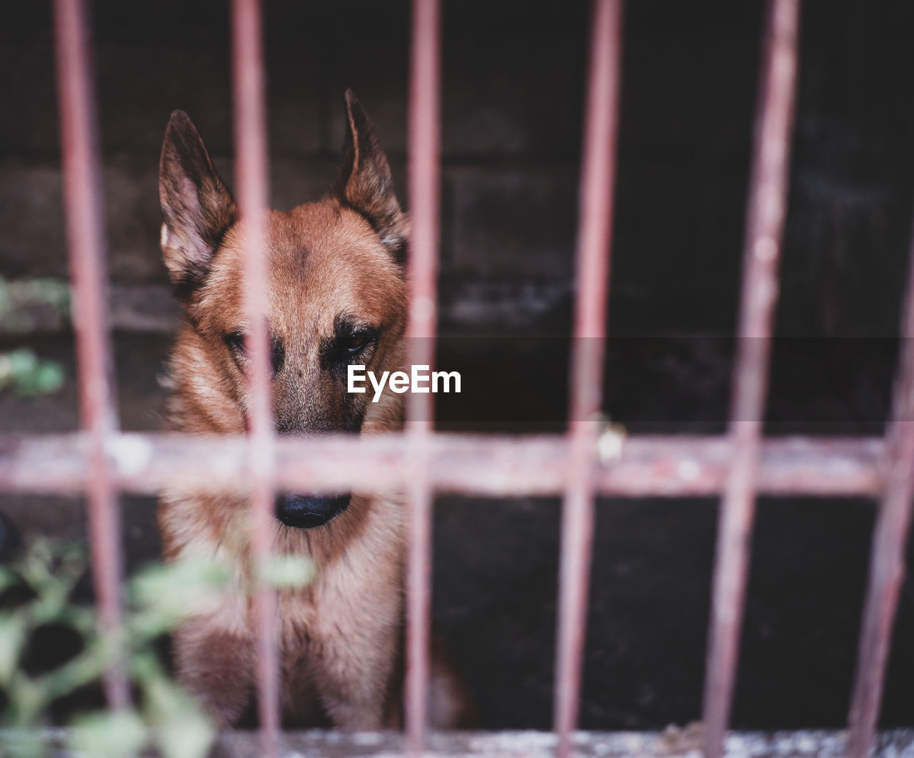 PORTRAIT OF A DOG IN CAGE AT HOME
