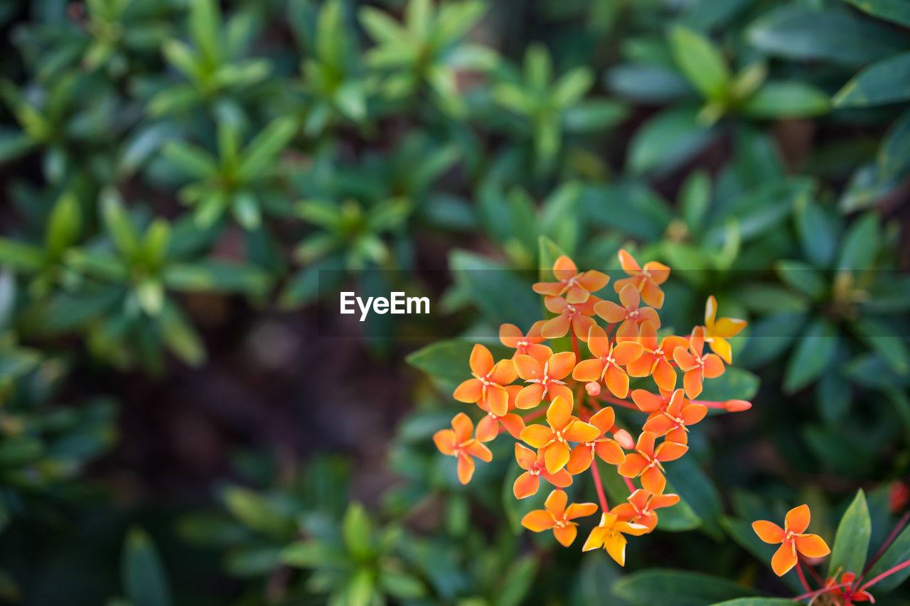growth, plant, flower, petal, beauty in nature, fragility, flowering plant, vulnerability, freshness, inflorescence, flower head, focus on foreground, close-up, nature, day, plant part, leaf, green color, no people, orange color