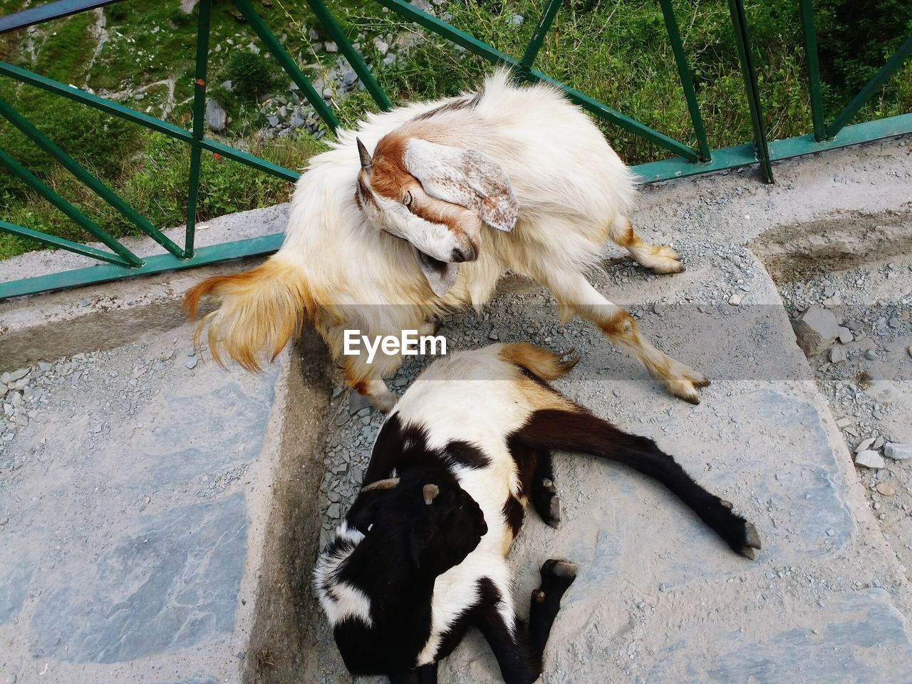 mammal, animal themes, domestic, pets, domestic animals, animal, one animal, vertebrate, canine, dog, high angle view, no people, day, nature, relaxation, outdoors, playing, white color