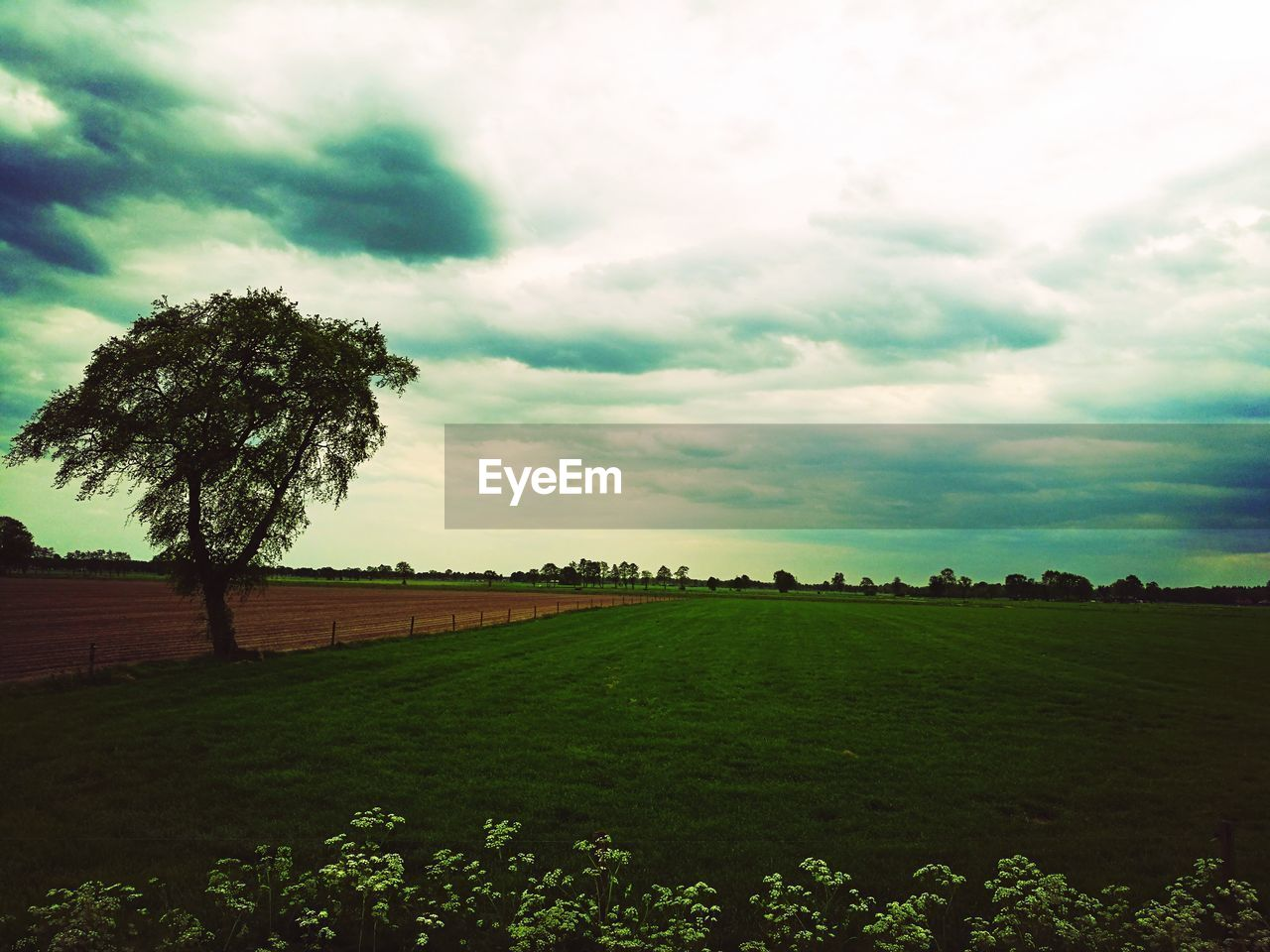 tree, field, landscape, tranquility, agriculture, tranquil scene, rural scene, beauty in nature, nature, cloud - sky, sky, scenics, day, no people, growth, grass, outdoors