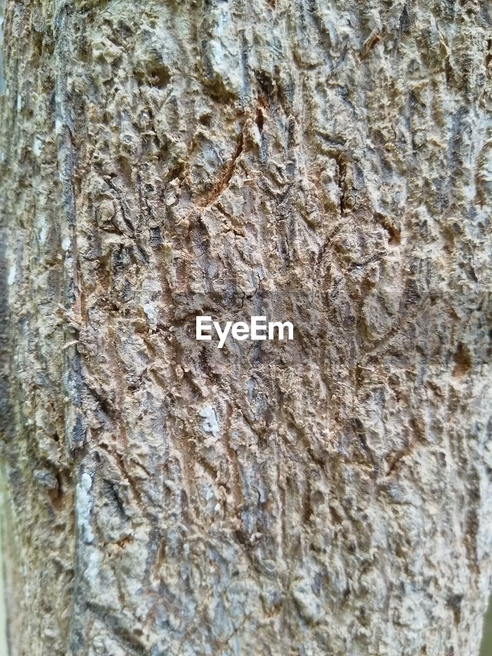FULL FRAME SHOT OF TREE BARK